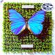 Schmetterlinge  - Die letzte Welt (2 LP-Set)